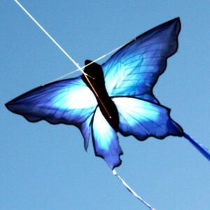 Ulysses Butterfly available wholesale to Toy and Hobby stores in Australia